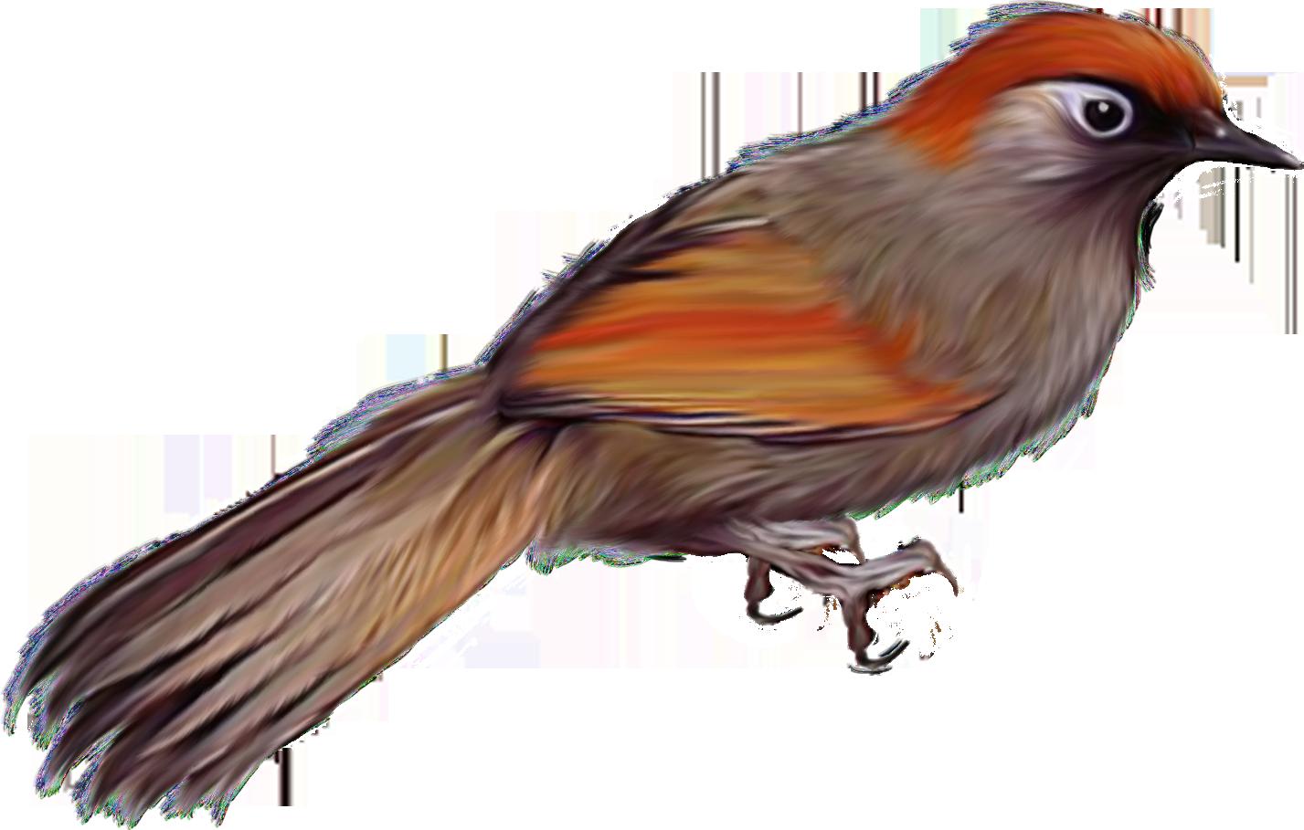 Большая Птица  bigbirdru